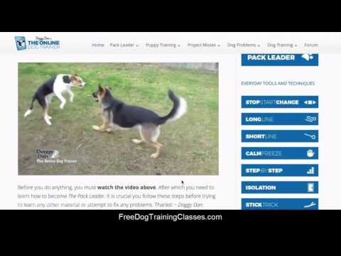 doggy-dan's-online-dog-trainer-review---does-the-course-work?