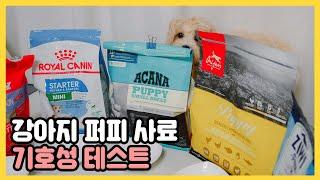 강아지 퍼피 사료 기호성 테스트 (스텔라앤츄이스, 지위…