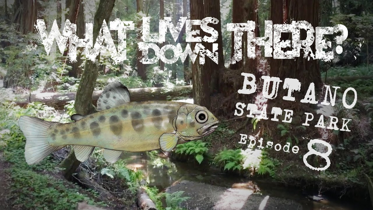 Download Searching Dense Forests and Tranquil Streams of Butano State Park for Aquatic Life | WLDT? Ep. 8