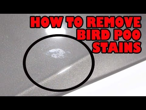 How To Remove Bird Poo And Water Spot Stains