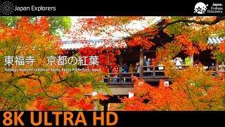 東福寺 京都の紅葉 Tofukuji, Autumn Leaves of Kyoto [8K]