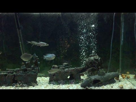 Shipwreck Aquarium Freshwater Fish