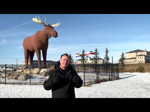 Shotgun Taylor - Canada Wants Mack The Moose To Be The World's Tallest