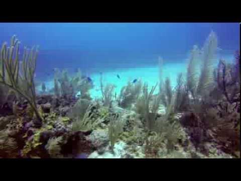 Become a Marine Conservation Volunteer in Belize!