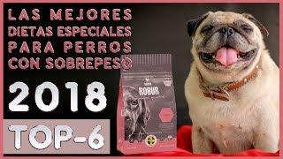 Las mejores 🔥 Dietas Especiales para Perros con Sobrepeso 🐶 TOP-6 🔥