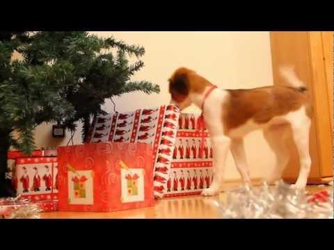 italienische hunde kein hund als weihnachtsgeschenk. Black Bedroom Furniture Sets. Home Design Ideas