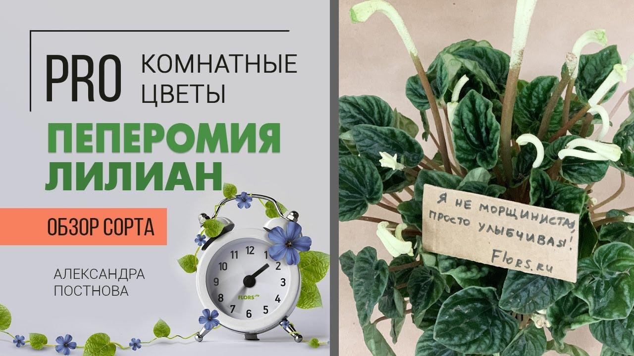 Пеперомия Лилиан - неприхотливое комнатное растение с изюминкой. Давайте знакомиться.