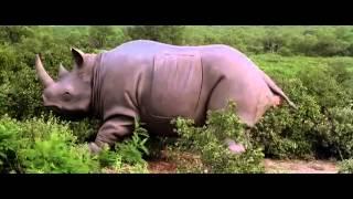 Кино Моменты - Эйс Вентура 2- Когда зовет природа