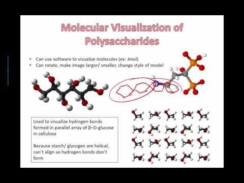 Molecular visualization of polysaccharides (IB Bio) (2015)