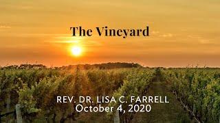 The Vineyard   Oct 4