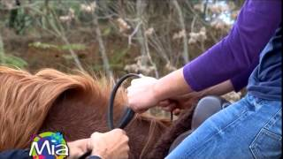 Repeat youtube video Cavallo: come si monta in sella?
