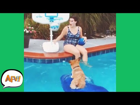 HOWLING For HOOPS! ?? | Funniest Animals | AFV 2020