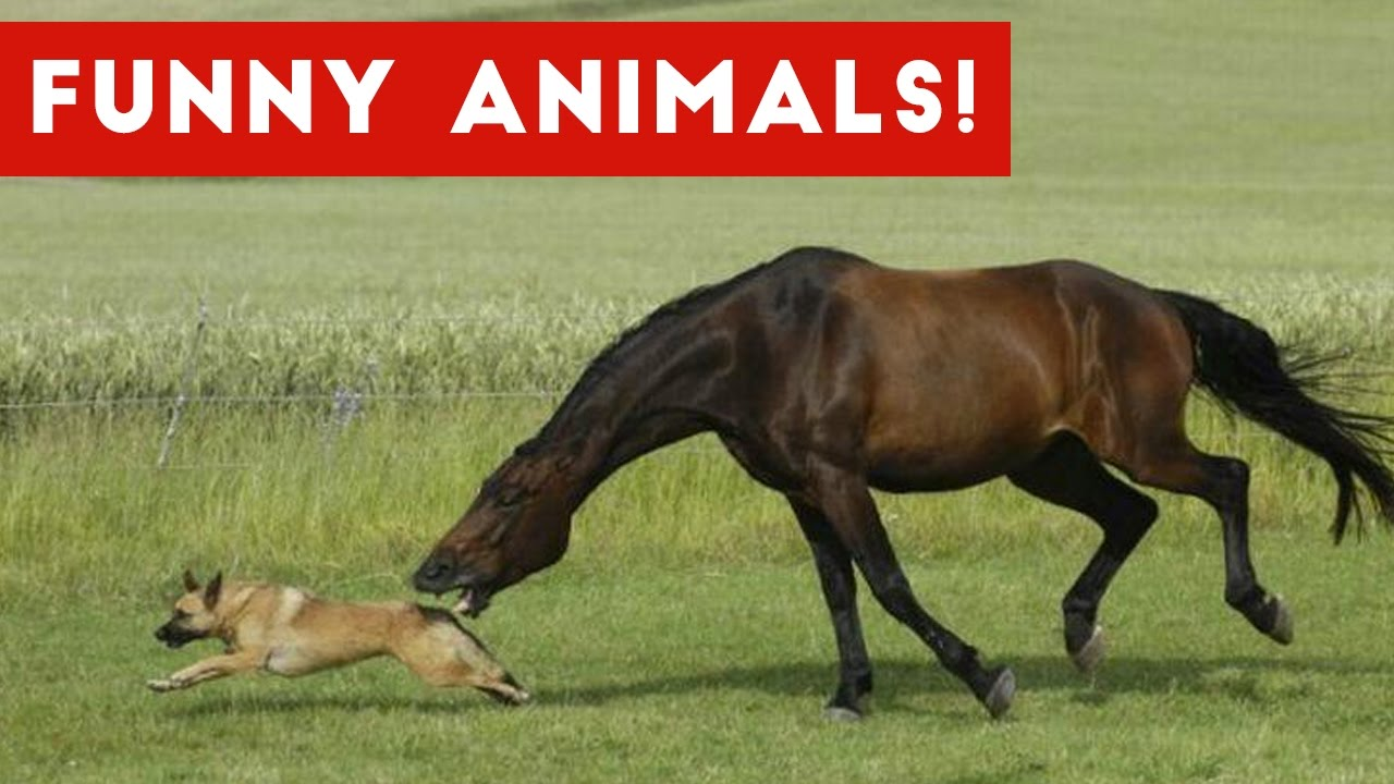 HORSES ★ Funny Horse Videos [Funny Pets] - YouTube |Youtube Pets Funny Horses
