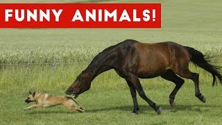 Funniest Pet \u0026 Animal Clips, Bloopers \u0026 Moments Caught On Tape Weekly Compilation | Funny Pet Videos