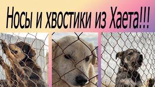 Видео и фото от нашего волонтера Зарины