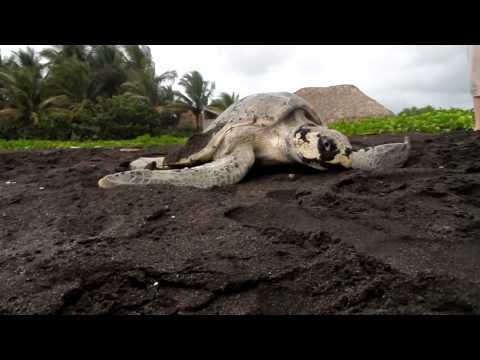 la-tortuga-marina-(guatemala)
