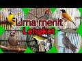 Suara Pikat Burung Kecil Paten Om Terbukti  Mp3 - Mp4 Download