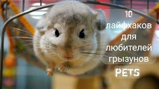 10 Лайфхаков для любителей грызунов