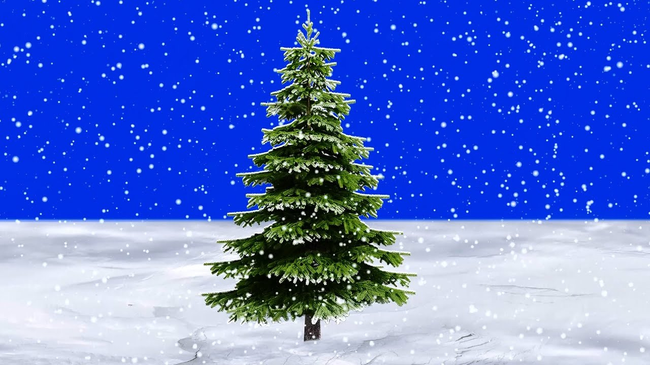 snow falling slowly in front of pine tree blue screen youtube