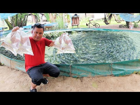 This Fish Farm Is Producing Thousands Of Fish Every Week