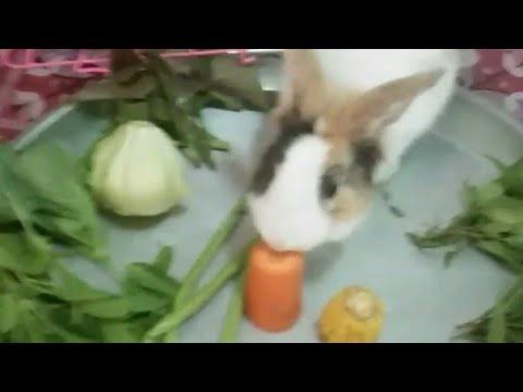 """""""ผัก🌱 10 อย่าง""""EP1🐰 กระต่ายเลี้ยง🐇 เลือกที่จะกินอะไรก่อน  小兔喜歡吃玉米"""