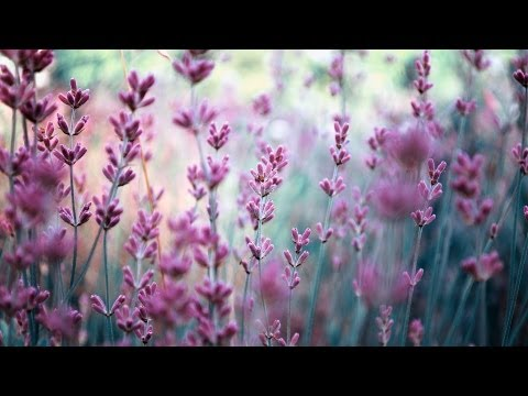 How to Use Lavender Oil | Skin Care - YouTube