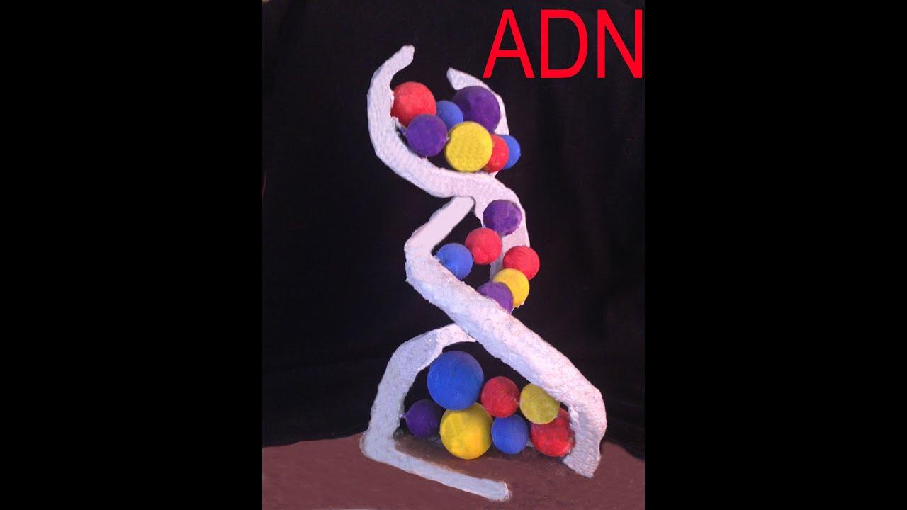 como hacer una maqueta de adn adn pets world
