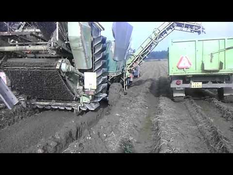 Brambory 2014 - težké podmínky - ZOD Opatovec