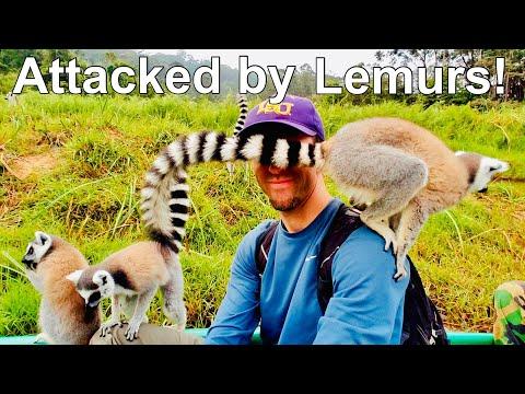 Lemurs in Madagascar. Best places in Madagascar.