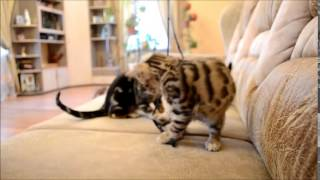 amazing cat tricks