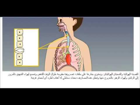 شرح الجهاز التنفسي