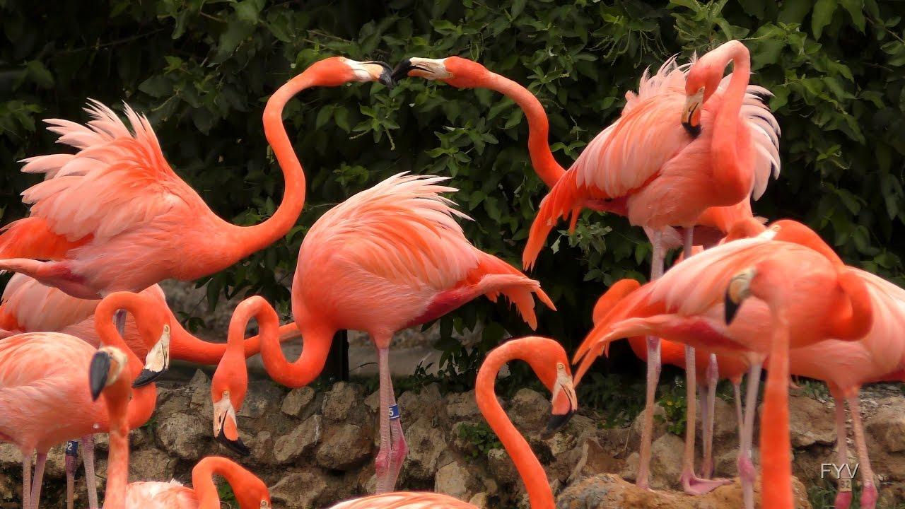 Flamingo nest - photo#53