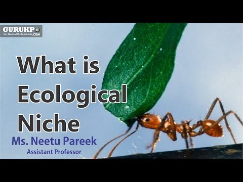 What is Ecological Niche (B.Sc. Biology) Ecology Gurukpo