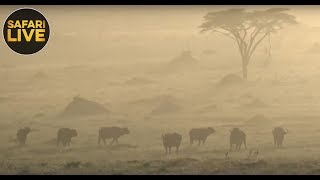 safariLIVE - Sunset Safari - November 14, 2018