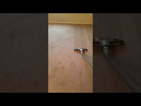 Carpet cleaning Las Vegas pet stain removal experts at work
