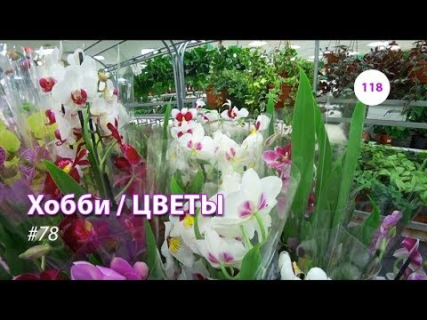 118#78 / Хобби-Цветы / 12.10.2018 - АШАН САД (ТК ТРОЙКА). ОБЗОР-2