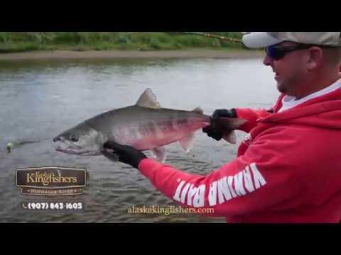 Alaska Salmon Fishing (Trip Highlights)