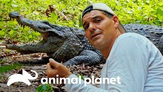 Frank provoca a feroz cocodrilo | Wild Frank en India | Animal Planet