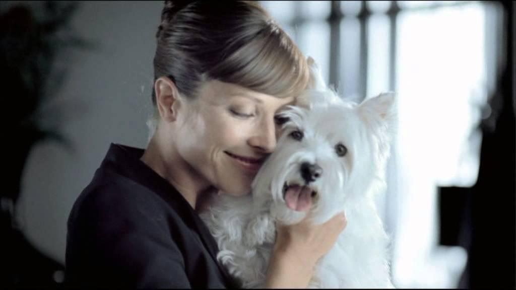 Cesar Werbung Hund