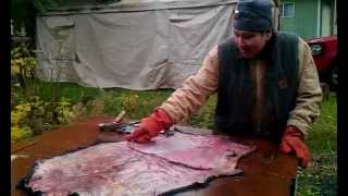 Tlingit man Kaajaak fleshing sea otter hide