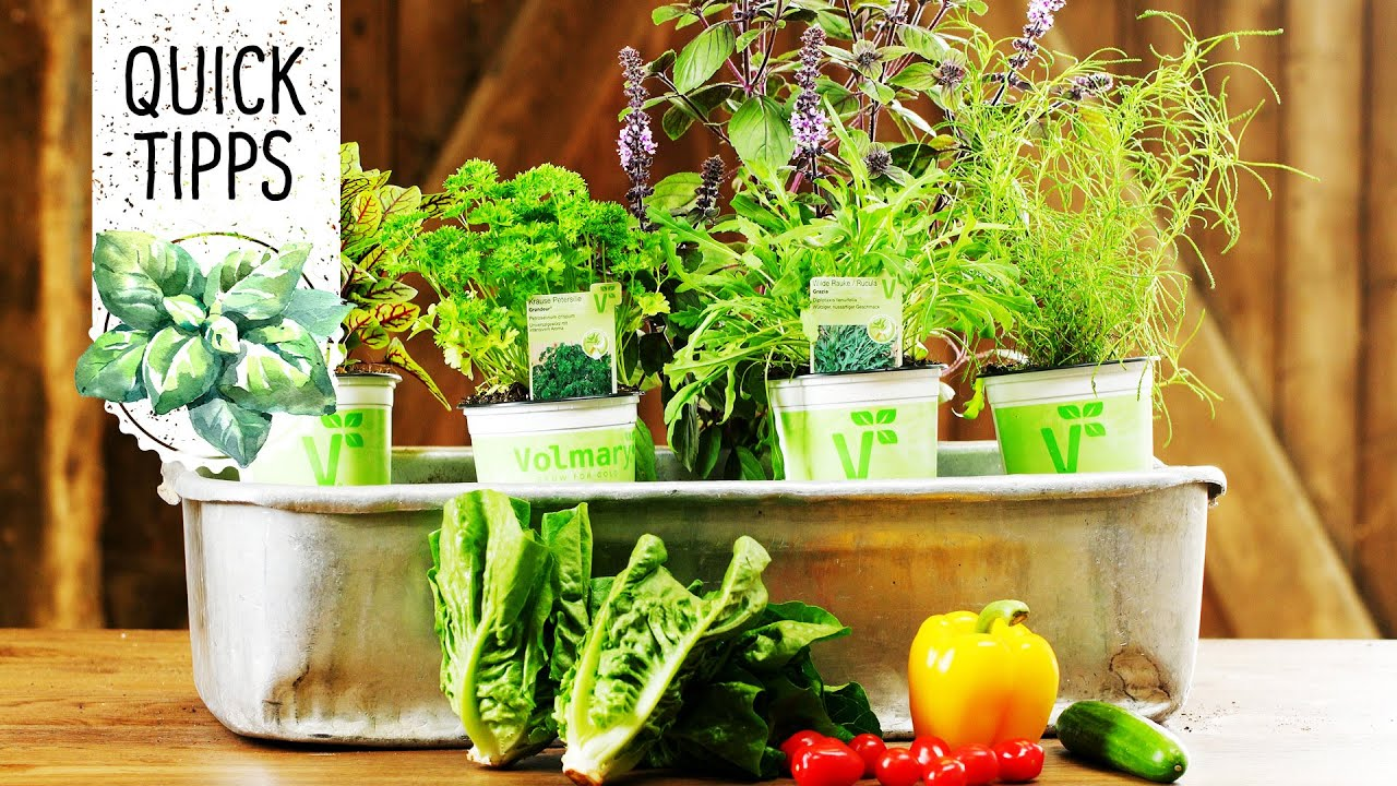 salatkräuter pflanzen für balkon & garten - volmary quicktipps, Gartengerate ideen