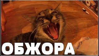 1 сентября.Говорящий кот.