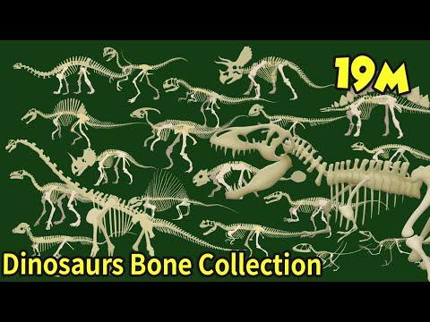 Кость динозавра мультфильм