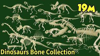 Study dinosaur bone fossils What shape are dinosaur bones? What did the dinosaurs eat? 공룡의 뼈 화석 모음집