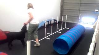 Hunter The Lab Does The Full Agility Course At Dogplay!