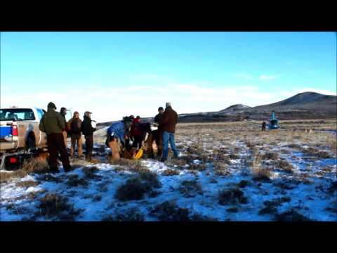 Mule deer capture/collar project near Superior, Wyoming