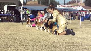 Camellia Capital Kennel Club, Inc. 12/01/13 - Bov