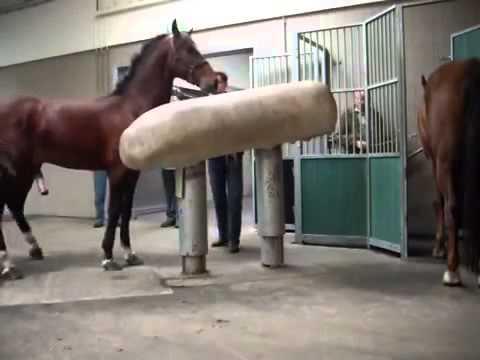 Stallion sperm count