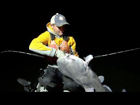 HOLY CATFISH!!!! Using Cut Bait For MONSTER Catfish