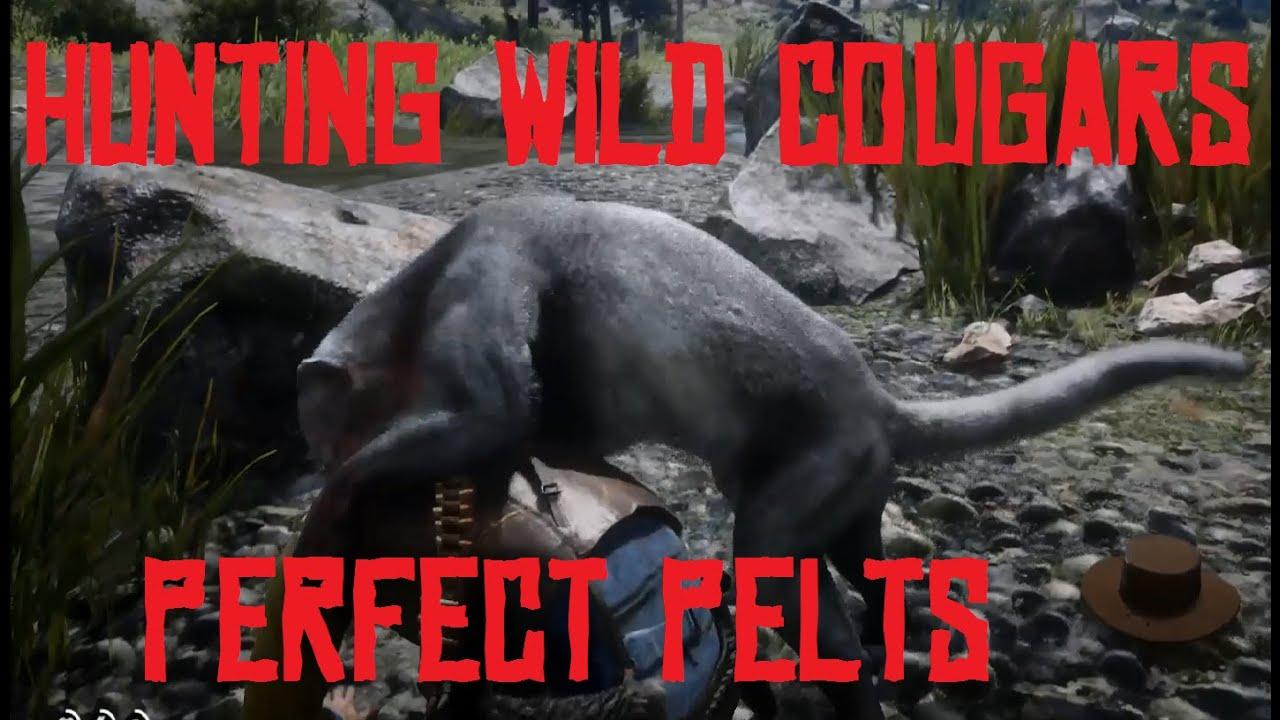 Image result for rdr2 cougar